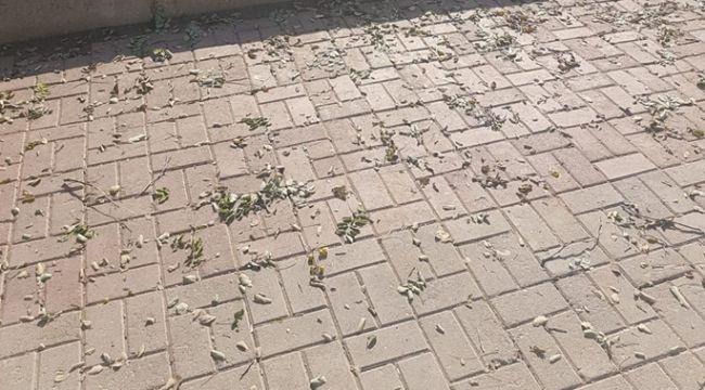 Eyyübiye'de Ağaçları Kökünden Söktüler