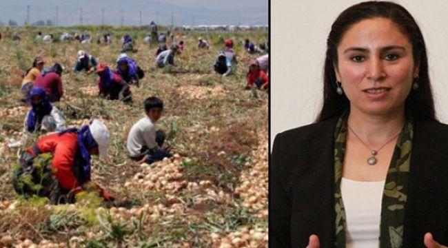 Mevsimlik Tarım İşçilerin Sorunları TBMM'ye Taşındı