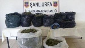 Şanlıurfa'da 21 kg Esrar Ele Geçirildi