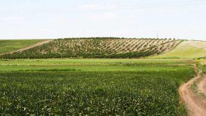 Arazi Toplulaştırma İşlemi Sürüyor