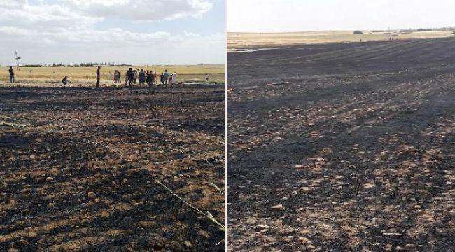 Urfa'da 200 dönüm tarla daha küle döndü