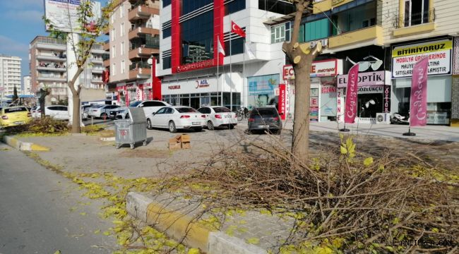 Lotus Hastanesi Önünü Kapatıyor Diye Ağaçları Katletti