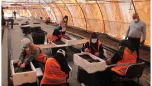 Şanlıurfa Büyükşehir ilk defa kendi çiçeğini üretiyor