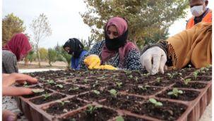 Şanlıurfa Büyükşehir kendi çiçeğini üretecek