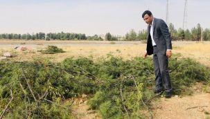Urfa'daki ağaç katliamı için suç duyurusu!
