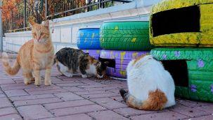 Şanlıurfa'da kedi evi projesi hayata geçti