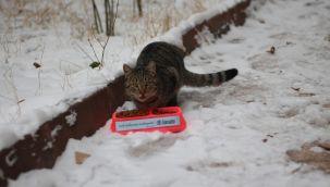 Gamador İnşaat, Kediler İçin Sokaklara Mama Bıraktı