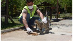 Siverek'te sokak hayvanları unutulmadı