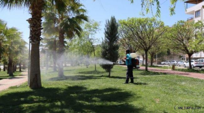 Urfa Huzurlu bir yaz için vektörle kesintisiz mücadele